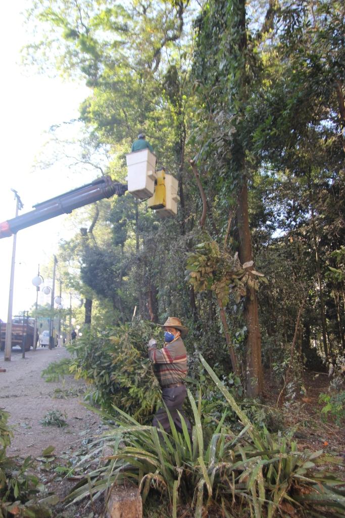 Bosque corte de árvores em junho 2016-06-27 10.24.39