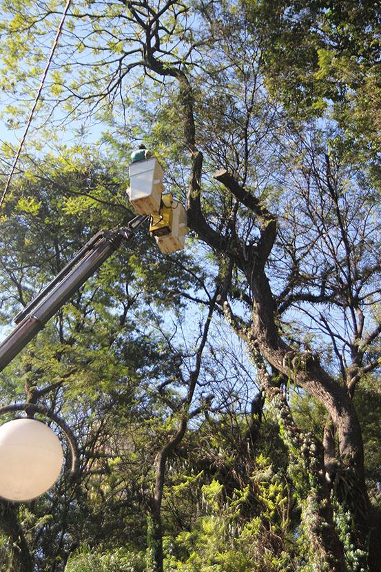 Bosque de Londrina corte de árvores em junho de 2016-06-27 11.29.21