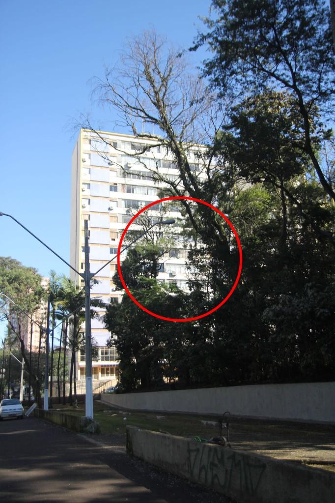 Bosque de Londrina corte de árvores em junho de 2016-06-27 11.34.43