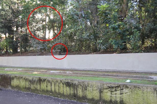 Bosque de Londrina corte de árvores em junho de 2016-06-27 11.35.09
